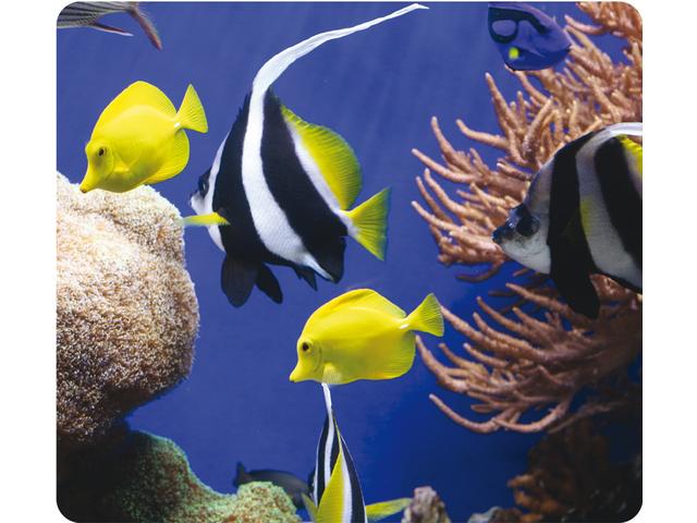 Muismat fellowes natuur collectie in de zee