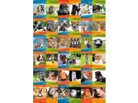 Krasstickers Dierenportretten 36 motieven, 540 stuks