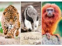 Miniposters Werelddieren Zuid Amerika 1026, 2 motieven, 20 stuks