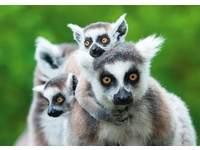 Beloningskaarten Knuffeldieren 4108 5 motieven, 96 stuks