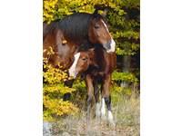 Miniposters Paarden 820 4 motieven, 20 stuks