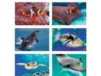 Beloningstickers 425 onderwaterwereld, 36 motieven, 720 stuks