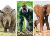Miniposters Werelddieren Afrika 1022, 2 motieven, 20 stuks