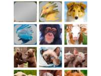Krasstickers 644 babydieren, 40 motieven, 600 stuks