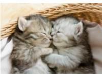 Beloningskaarten 4595 Puppy's en Kittens, 4 motieven, 96 stuks