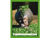 Cahiers 24 lijnen nijlpaard, FSC formaat 16,5 x 21 cm, 80 grs.