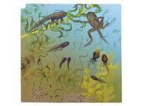 Rolf Connect - Groeipuzzel kikker 28 x 28 cm 4 lagen 86 stukjes