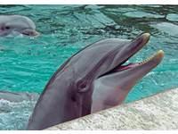Miniposters Dolfijnen 882 4 motieven, 20 stuks