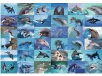 Krasstickers 787 dolfijnen, 36 motieven, 600 stuks