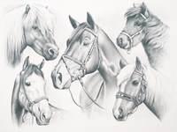 Schetsen stap voor stap 40 x 30 cm paarden