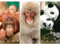Miniposters Werelddieren Azië 1023 2 motieven, 20 stuks