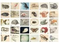 Beloningsstickers 427 Rijksmuseum getekende dieren, 30 motieven, 600 st.