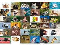 Beloningsstickers Aaibare dieren273 36 motieven, 720 stickers
