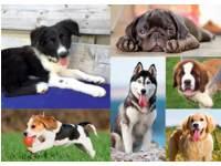 Ansichtkaarten 5733 hond,poes,paard, 3 motieven, 48 stuks