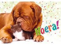Miniposters puppy's en kittens 985 4 motieven, 20 stickers
