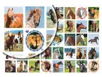 Beloningsstickers Paarden en Veulens 231, 40 motieven, 800 stuks