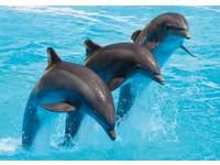 Ansichtkaarten Dolfijnen 5707 4 motieven, 48 stuks
