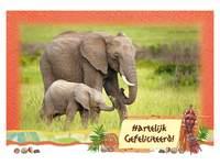 Miniposters Afrikadieren 833 4 motieven, 20 stuks