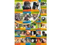 Beloningsstickers Dierenportretten 275, 36 motieven, 720 stickers