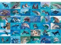 Beloningsstickers Dolfijnen 387, 36 motieven, 720 stuks
