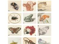 Beloningstickers 427 Rijksmuseum getekende dieren, 30 motieven, 600 st.