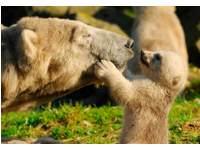 Beloningskaarten 4576 dieren met jong, 6 motieven, 96 stuks