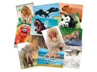 Beloningskaartpakket werelddieren 314600, 36 motieven, 72 st