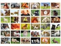 Beloningsstickers 408 boerderijdieren, 36 motieven, 720 stuks