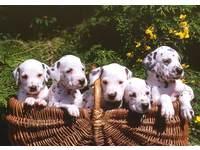 Beloningskaarten Puppy's en Kittens 4104, 6 motieven, 96 stuks