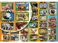 Beloningsstickers Afrikadieren 36 motieven, 720 stuks