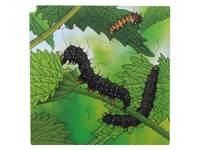 Rolf Connect - Vier Lagen Wachstumspuzzle + kostenlose App Schmetterling