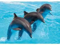 Beloningskaarten Dolfijnen 4020 4 motieven, 96 stuks