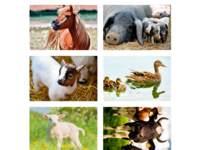 Beloningstickers 408 boerderijdieren, 36 motieven, 720 stuks