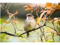 Vogelvrienden -  (3 t/m 7 jaar)