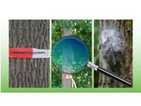 Natuur in de stad - De eikenboom - (6 t/m 10 jaar)