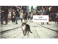 Natuur in de stad - Katten - (6 t/m 10 jaar)