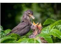Vogelnesten en eieren - (6 t/m 10 jaar)