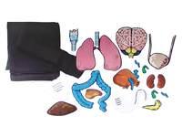 Ontdeksets anatomie