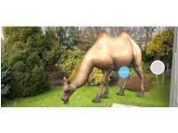 Egypte Kamelen -  (3 t/m 7 jaar)